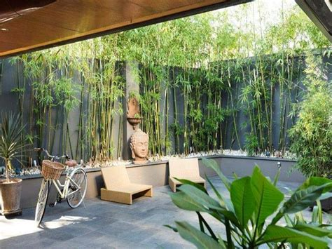 backyard bamboo a great idea for a small private yard dark tall walls with bamboo for a green edge i d