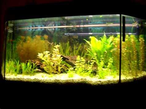 s 252 damerika aquarium 140 liter 20 01 2011