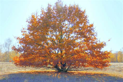 So if you are taking prep and have the signs and symptoms mentioned above, it is important Herbst: Bäume(2) Foto & Bild | world, bäume, natur Bilder ...