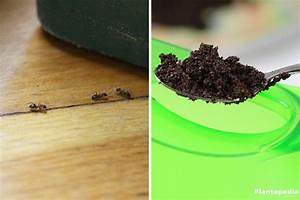 Mittel Gegen Ameisen : ameisen bek mpfen im haus in der wohnung 22 wirksame mittel plantopedia ~ Buech-reservation.com Haus und Dekorationen