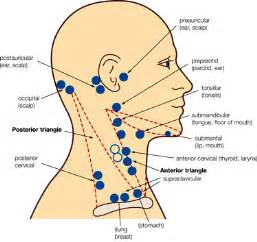 Lymph Nodes in Neck and Back of Head