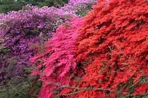 Braune Blätter Am Rhododendron : rhododendron winterhart machen so berwintert er am besten ~ Lizthompson.info Haus und Dekorationen