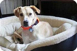 Patch | Adopted Dog | Cheshire, CT | Golden Retriever ...