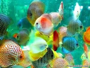 Aquarium Fische Süßwasser Liste : 8ebgkzumcmhb0y1fvmg9r e79vz s wasserfische aquarien und lebewesen ~ Watch28wear.com Haus und Dekorationen