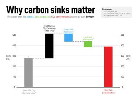 back to back sinks what are carbon sinks conserve energy future