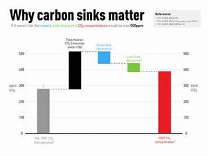 What Are Carbon Sinks And What Are Natural And Artificial