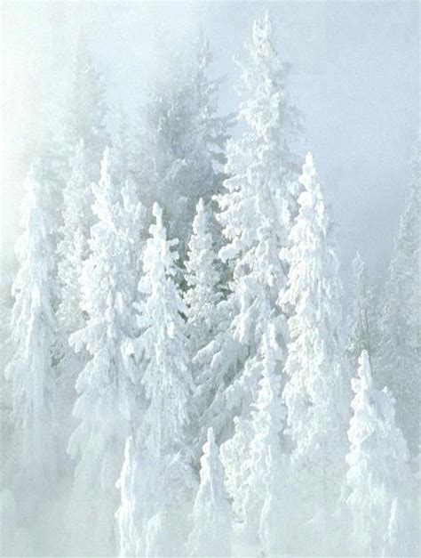 Harga The Shop White Tree Snow best 25 snow covered trees ideas on snow