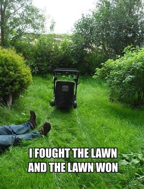 Grass Memes - 18 best grass memes images on pinterest funny images funny pics and funny photos