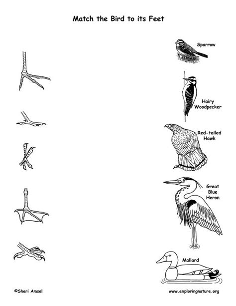 match the bird to its bird lessons birds science activities grade science