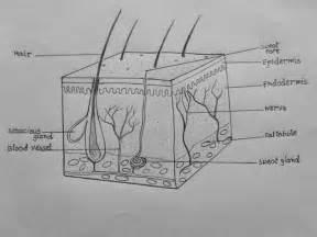 Draw It Neat   How To Draw Skin Ls