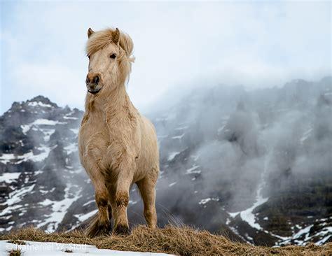 de las razas de caballos mas hermosos  han existido