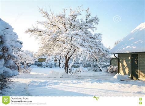 Stuehle Im Schnee by Haus Und Gartenb 228 Ume Bedeckt Im Schnee Auf Einer K 228 Lte