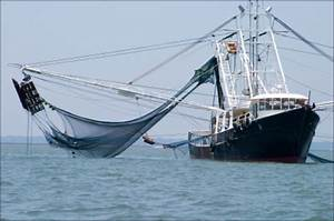 Out-of-State Trawlers Depleting R.I. Herring — ecoRI News