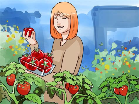 grow vegetables  pictures wikihow
