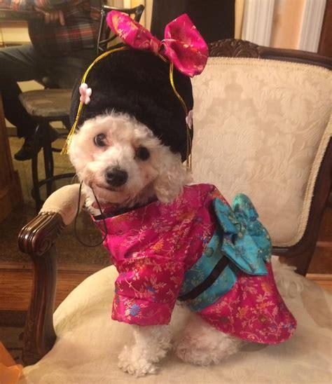 Pedigree Pet Costume Contest Winners - King Kullen