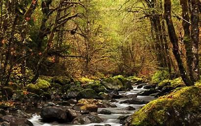 Forest River Landscape Rainforest Nature Deciduous Stream