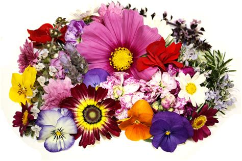 image of all flowers edible flowers fresh origins