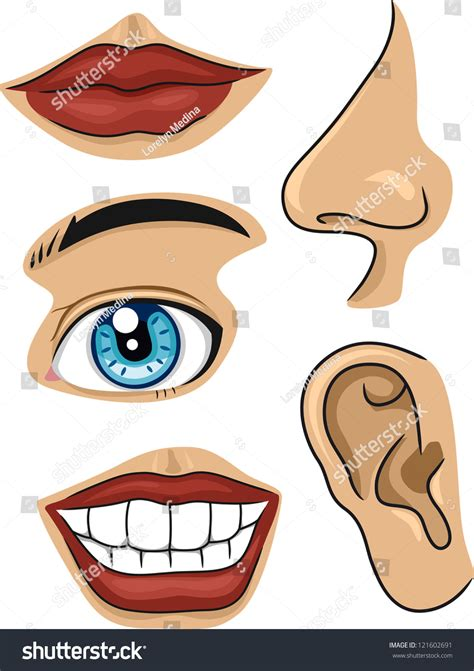 illustration  parts face stock vector