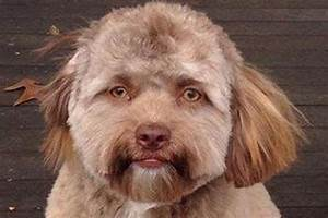 There's a scientific reason why people think this dog ...