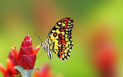 Backgrounds Butterfly Pretty Background Wallpapers Desktop Ios
