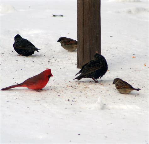 5 tips to help birds weather winter nh audubon