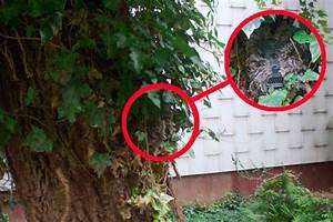 Kamera Verstecken Tipps : tipps zur tarnung von wildkameras ~ Yasmunasinghe.com Haus und Dekorationen