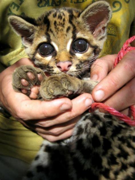 suesse baby tiere sehen sie doch nicht niedlich aus