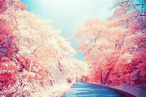 pink forest on Tumblr