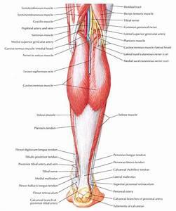 Waxing Leg Diagram