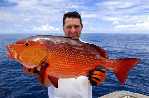 Deep Sea Fishing Bermuda Party Boat by Drift Fish The Atlantic Trip Fort Lauderdale Toursales