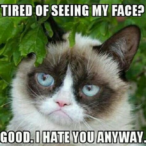 Create Grumpy Cat Meme - life on earth on twitter quot grumpy cat memes make every day worth living found at http t co