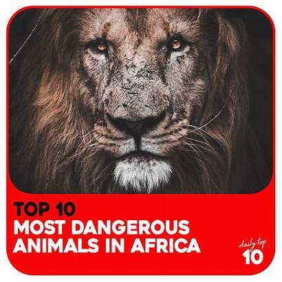 Dangerous Animals Most Africa Wild Want Meet
