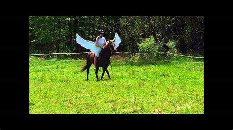 wings horse pegasus scenes
