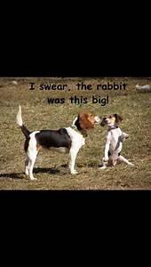 De 25+ bedste idéer inden for Beagle hunting på Pinterest ...