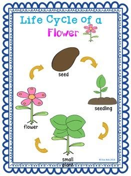 plants mini unit  kindergarten   grade  star