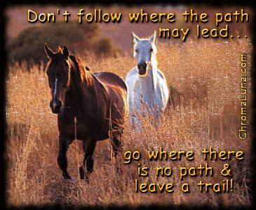 cool horse quotes quotesgram