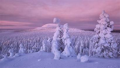 Snow Winter Earth Trees Nature Covered Background