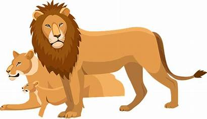 Lion King Pixabay Cub Lions Wildlife Theatre