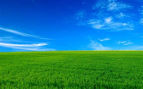 blissful day desktop pc  mac wallpaper