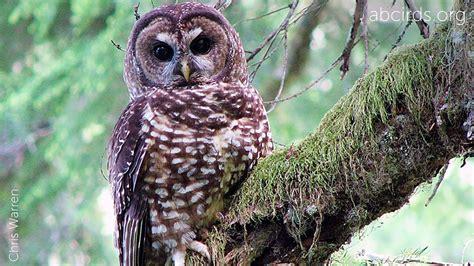 Permalink to Free Wallpaper Owls