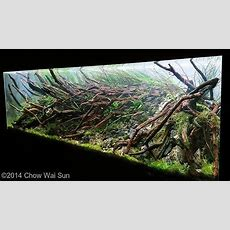 755 Best Aquascaping  Planted Tanks  Aquariums Images On