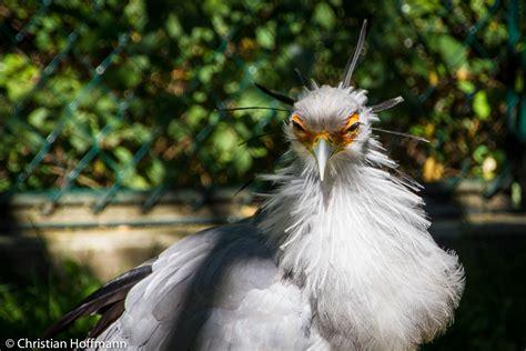 Zoologischer Garten Lichtenberg by Tierpark Berlin Lichtenberg Fotoreiseblog