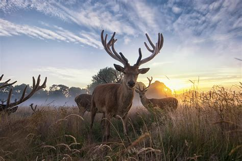 arriere plan du bureau fond écran hd sauvage cerf bois lever de soleil