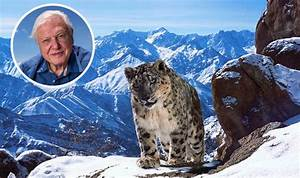 David Attenborough Planet Earth II photographs released ...