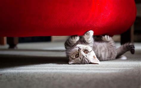 Cute Little Cat Wallpapers