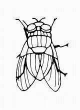 Coloring Fly Walrus sketch template