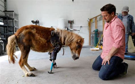 pony stands   feet    time  prosthetic