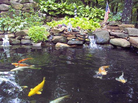 pictures of koi ponds beautiful koi fish pond www pixshark com images galleries with a bite