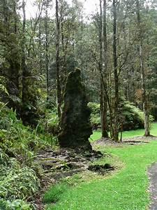 Lava Tree Trail Improvement Project In Progress