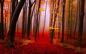 Autumn, Forest, Path, Trees, Fog, Fall, Yellow, And, Red, Leaves